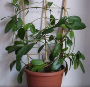 Все для комнатных растений