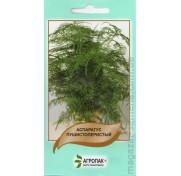 Аспарагус пушистоперистый (5 семян)