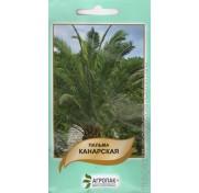 Пальма Канарская (5 семян)