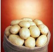 Картофель Саванна, 1 репродукция (5 кг)