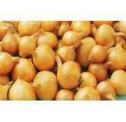 Лук-севок кущевка (0,5 кг)