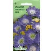 Скабиоза кавказская синяя (10 семян)