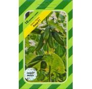 Огурец Амур F1 (10 семян)