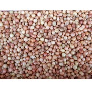 Лук-севок Штутти ОЗИМЫЙ (0,5 кг)